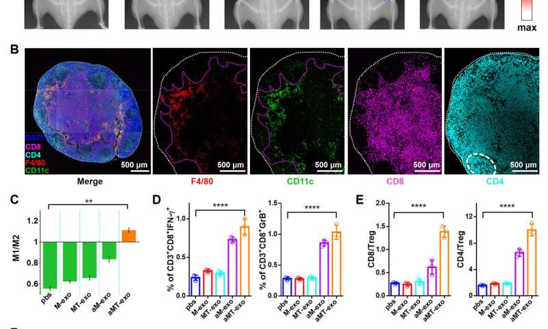 Chimeric exosomes co-activate immune response and tumor microenvironment for cancer immunotherapy