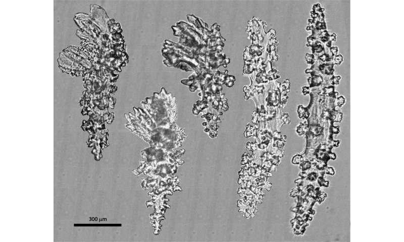 Korallen, die einst für eine einzige Art gehalten wurden, sind in Wirklichkeit zwei, schlussfolgert die Studie