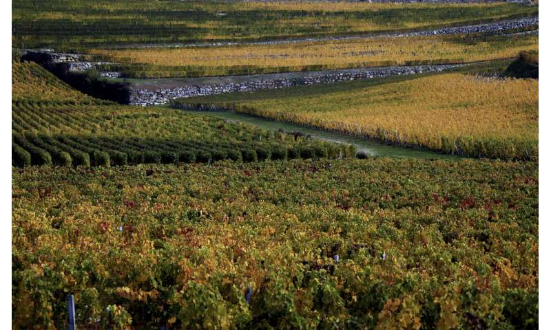 Costly frost in France attributed to climate change