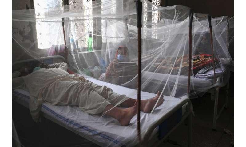 Dengue can cause intense flu-like symptoms that earned it the nickname 'breakbone fever'
