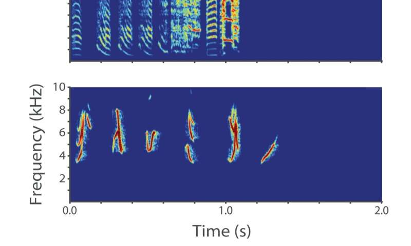Early acoustic experiences can alter methylation in the songbird embryo's forebrain