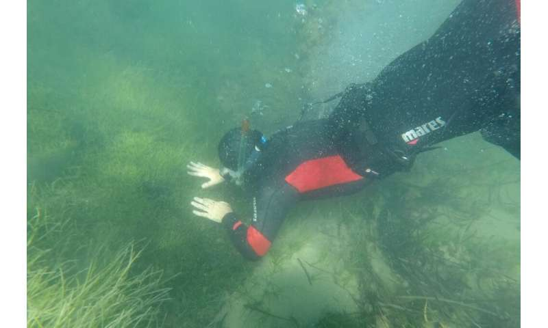 Experts have identified 40 invasive plant and animal species in Albanian waters