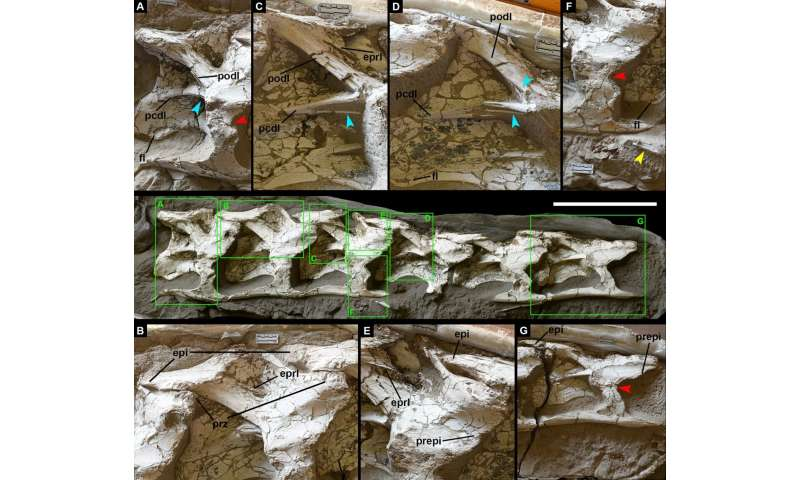 First giant dinosaur fossils from Xinjiang Hami Pterosaur Fauna found