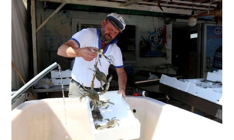 Fisherman Baci Dyrmishaj says the invasive blue crab destroys his nets and attacks his catch