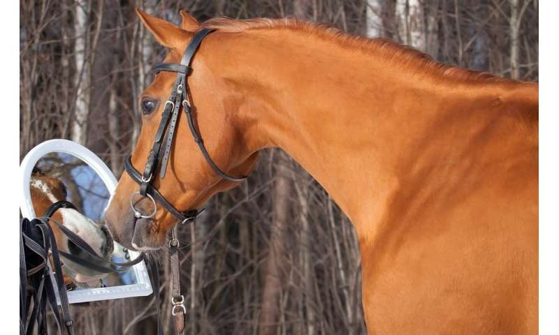 Horses can recognise themselves in a mirror, study finds