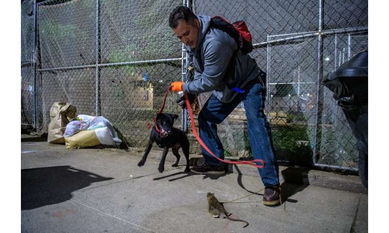 Jason Rivera, a member of the rat-catching group, and his dog attempt to catch a rodent in New York City on May 14, 2021