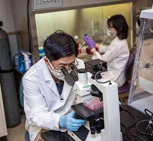 Virólogos de la Universidad Estatal de Kansas publican nuevos hallazgos sobre la opción de tratamiento del SARS-CoV-2