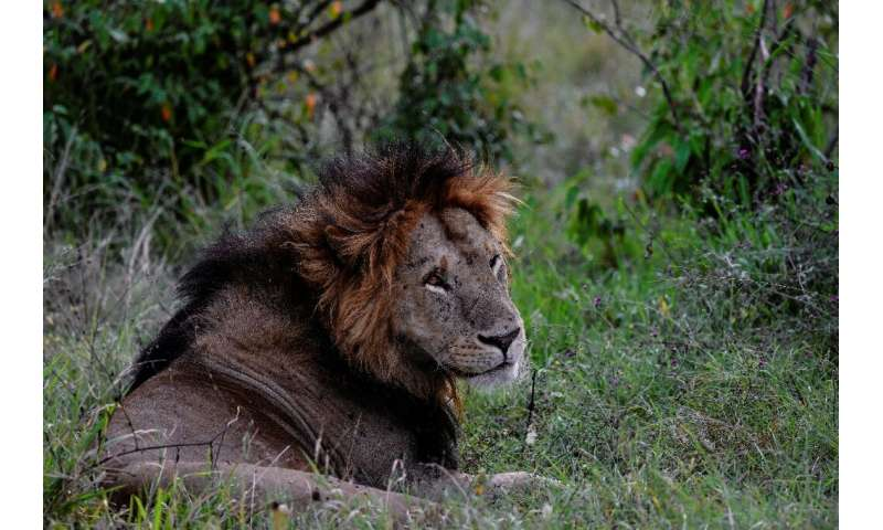 Kenya is trying to strike a balance between protecting its wildlife while managing the dangers they pose when they raid human se