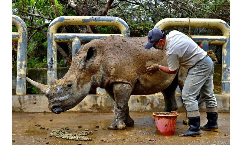 Leofoo Safari Park imported eight rhinos from Africa in 1979 and now has the most successful breeding programme in Asia with 23