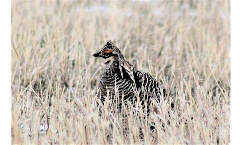 Making hay while the birds nest? Study finds landowners willing to protect grassland birds nesting in their hay fields