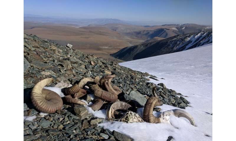 Melting Mongolian ice reveals fragile artifacts that provide clues about how past people lived