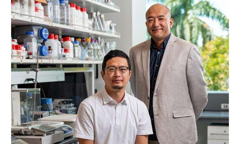 Molecular bridge mediates inhibitory synapse specificity in the cortex