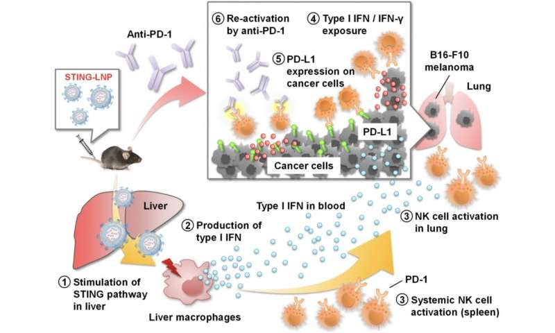 New nano particles suppress resistance to cancer immunotherapy