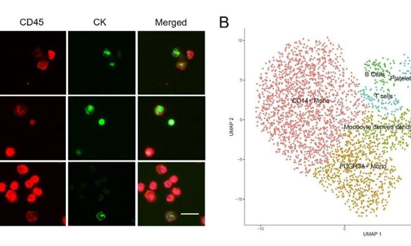 New strategy for precise isolation and molecular analysis of circulating tumor cells and fusion cells