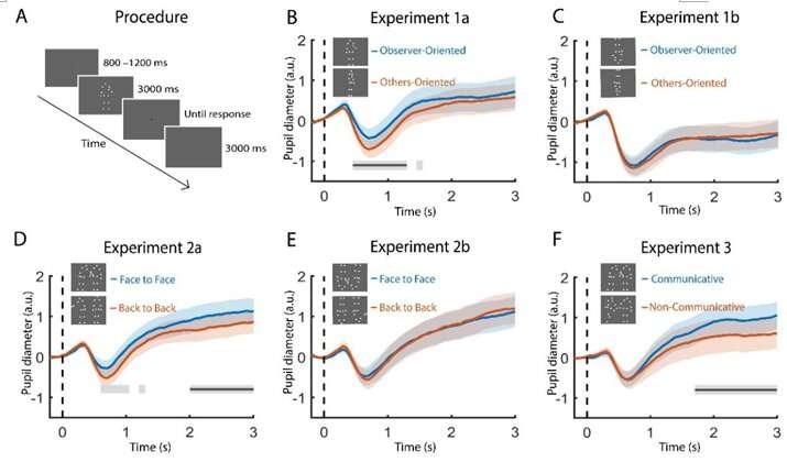 Pupils mirror perception of social interaction