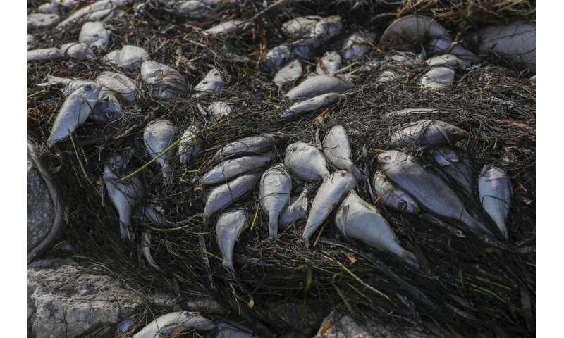 Red tide uptick spurs respiratory warning at Florida beaches