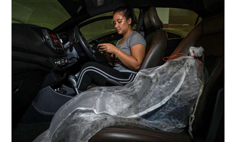 Rescued bees are kept under netting in a car for transportation to a new home