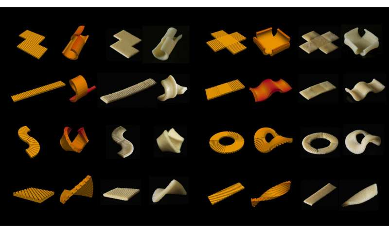 Researchers develop pasta that morphs into shape when cooked