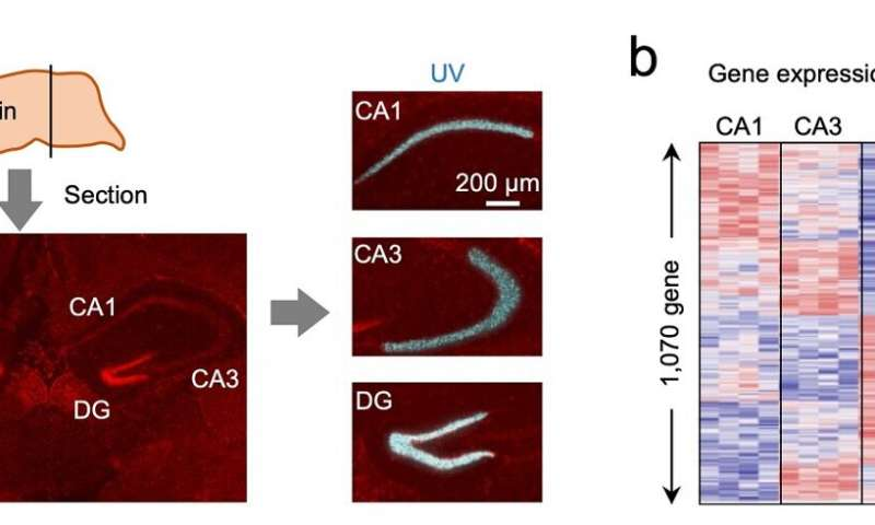 Researchers developed photoirradiation-based super-resolution gene analysis technology