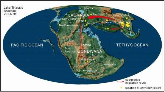 Researchers discover new anthrophyopsis fossil material in Sichuan Basin, China