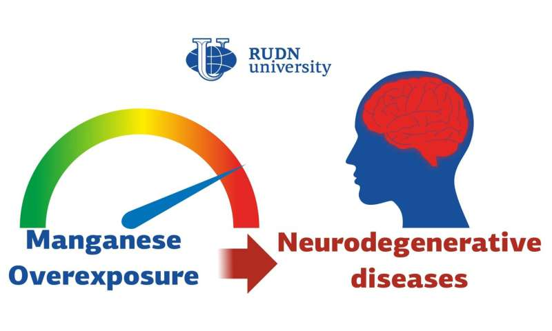 RUDN University Doctors Study the Harm to the Brain Induced by Manganese
