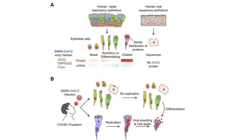 SARS-CoV-2 replication targets nasal ciliated cells early in COVID-19 infection