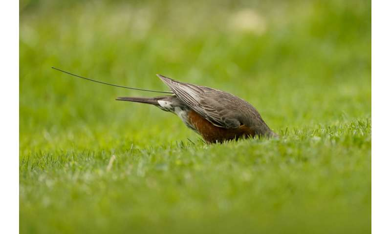 Scientists hail golden age to trace bird migration with tech