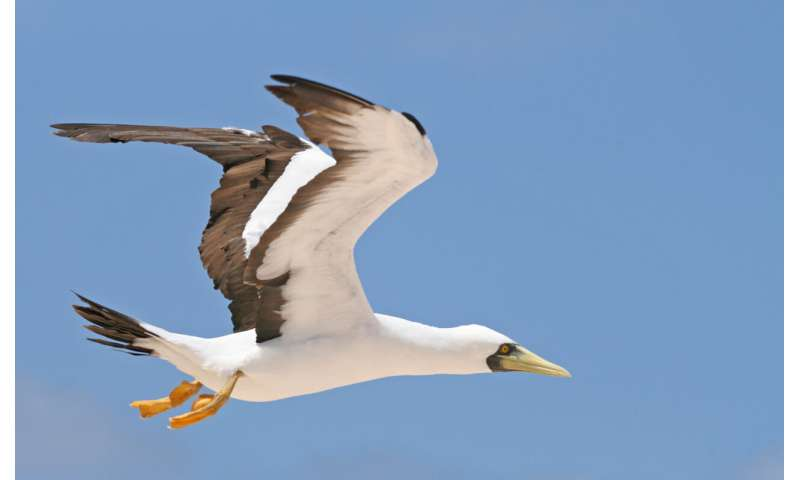 Seabird colony creates 'halo' of depleted fish stocks