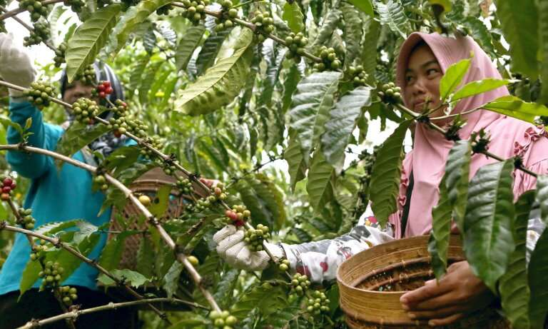 Seamless in Sumatra – Joined-up thinking benefits tigers, climate and communities