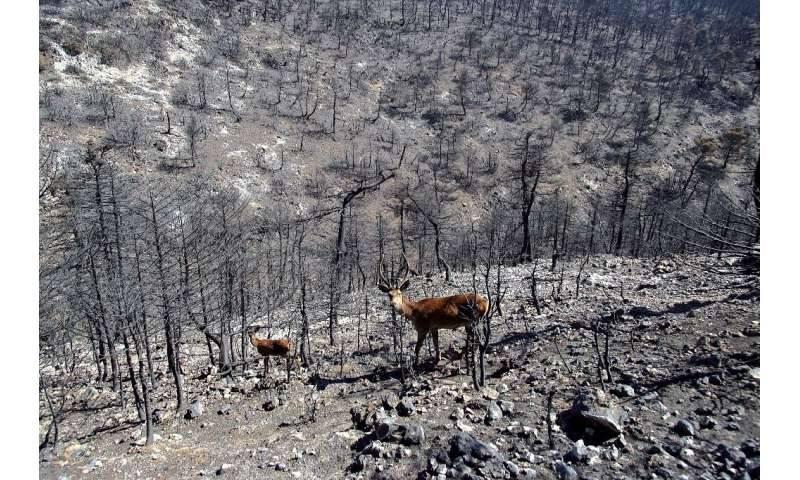 Swathes of Greece including biodiversity hotspots have burned this summer