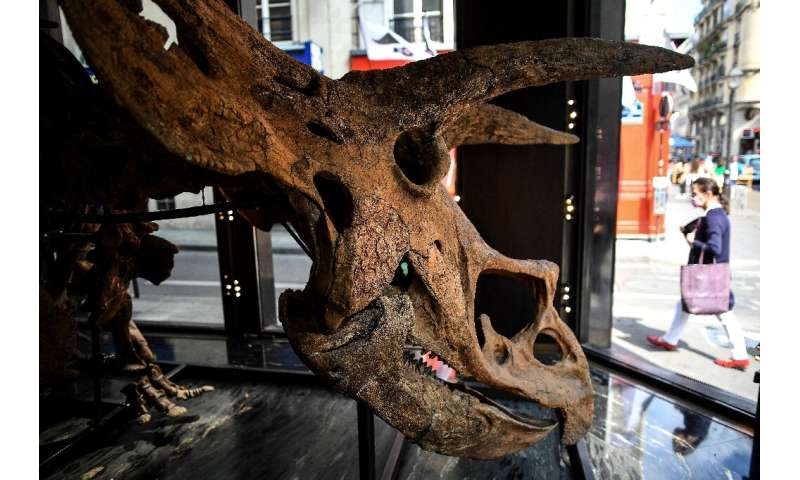 The dinosaur will be on display starting October 18 at the Drouot auction house in Paris
