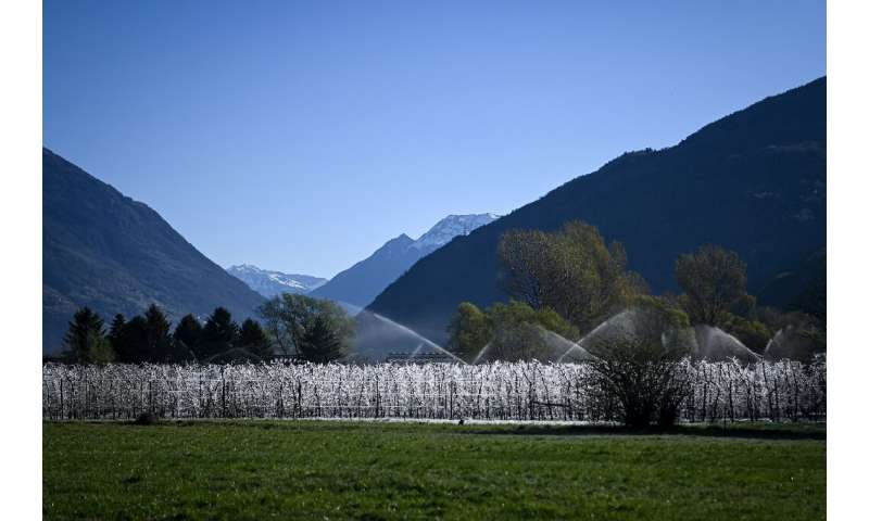 The frozen trees of Palazzetta stand in stark contrast to the spring vegetation in the rest of the Valtellina valley
