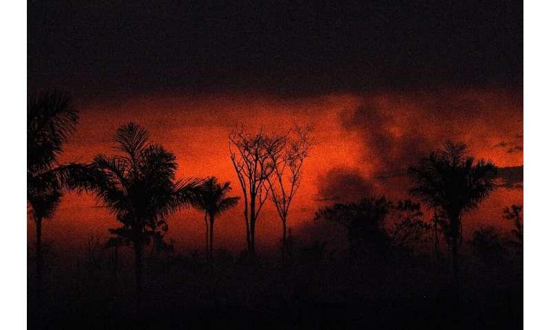 Hubo un total de 222,798 incendios forestales en Brasil en 2020, el número más alto desde 2010, según el espacio brasileño a