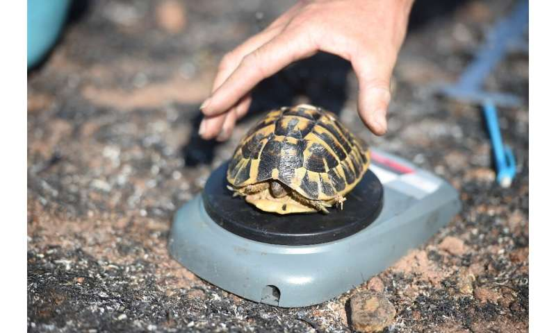 Les tortues sont apparues sur Terre il y a 250 millions d'années