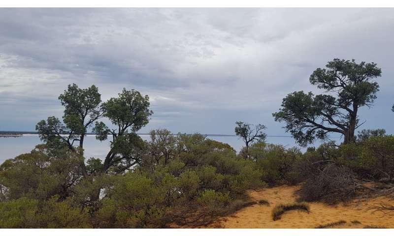 Encontramos una historia secreta de megasequías escrita en los anillos de los árboles.  El futuro del cinturón de trigo puede ser más seco de lo que pensamos