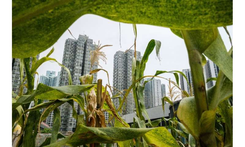 While Hong Kong is one of the most densely packed places on earth, there is still considerable space to grow food locally