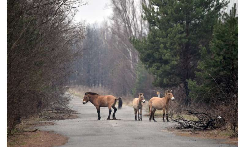 Wild horses flourish in Chernobyl 35 years after explosion