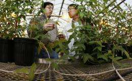 El descubrimiento de genes puede conducir a nuevas variedades de plantas de soja