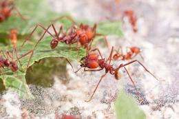 Leafcutter ant genome reveals secrets of fungus farming ways
