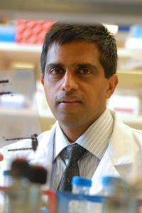 Research points to 2 promising proteins for preventing diabetes