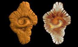 Discovery of a complex, multicellular life from over two billion years ago