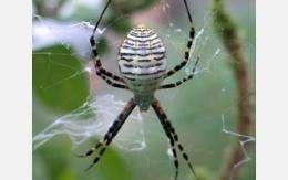 Scientists untangle spider web stickiness