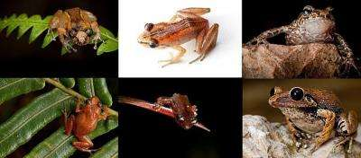 Conservationists say they have found six rare frog species that are unique to the Caribbean nation of Haiti