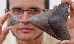 Scientists discover megalodon shark nursery