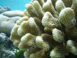 New insights into helping marine species cope with climate change