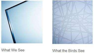 Bird-friendly glass looks like spider web to birds