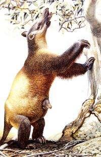 New evidence links humans to megafauna demise
