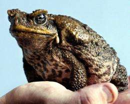 A cane toad sitting on a keeper's hand at a zoo