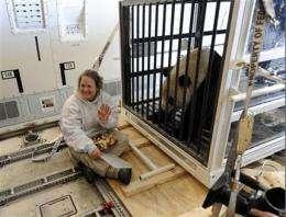 American-born pandas reach their new home in China (AP)