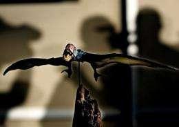 A  mockup of a pterosaur